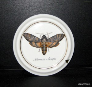 Dekorace na zeď - Lišaj SMRTIHLAV 18137 saxe